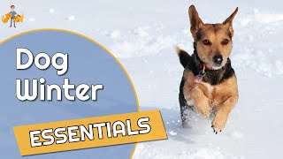 Essential Winter Dog Accessories (gifts To Keep Them Happy, Healthy + Safe)