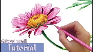 How To Draw And Shade A FLOWER In Colored Pencil