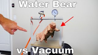 Putting Water Bears in a Vacuum Chamber to See if Water Bears Can Survive on the Moon