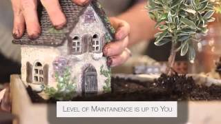 Fairy Gardens And Miniature Gardens
