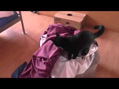 Katze sortiert Bettwäsche