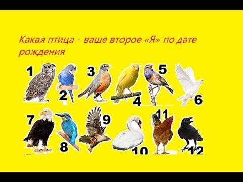Астролог нумеролог челябинск
