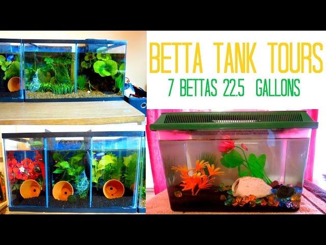 Betta Tank Tours