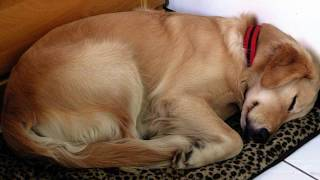 OWNER'S DOG LOOKS AT HIM WHILE HE FALLS ASLEEP, LATER FINDS OUT WHY