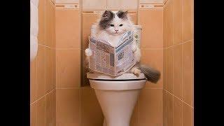 Как приучить кошку к унитазу? Советы владельцам кошек How to accustom a cat to a toilet bowl?