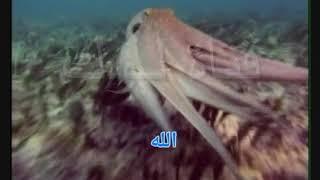 اغاني حصرية روح له راشد الفارس - كاريوكي - موسيقى - لوك - كاريوكي عربي تحميل MP3
