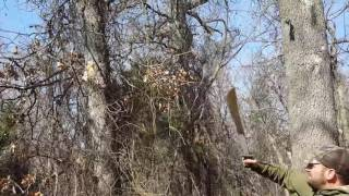 How to remove climbing thorn vines from trees.