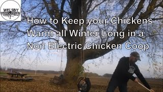 How To Keep Your Chickens Warm All Winter Long In A Non Electric Chicken Coop