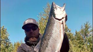 "Kenai River Sockeye Salmon ""Red Run"" 2018"