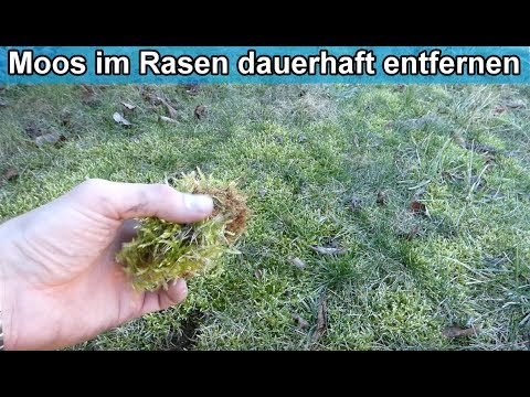 Moos im Rasen dauerhaft loswerden / Rasenfilz und Moos im Rasen bekämpfen / entfernen - Anleitung