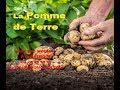 Légume peu calorique : la Pomme de terre - Mon Bio Moulin à Dunkerque