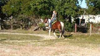 Sandy 10 Year old Tri Colored Paint Mare For Sale