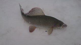 Рыбалка весеннего хариуса на лесных речках