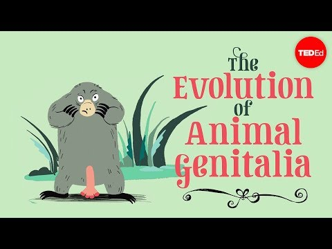 The evolution of animal genitalia - Menno Schilthuizen