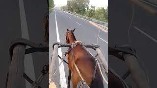 Highway Road Ghode Ki Dor