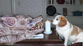Zombie Dog Prank Turns into Love Affair with Cute Dog Penny