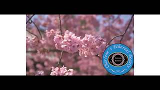 Charlene's Ethereal Beauty Facebook Business Page Video