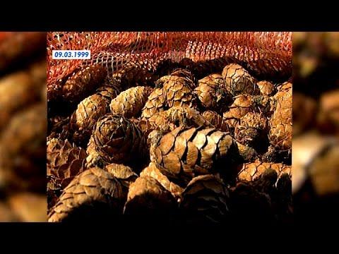 Co daje głodu smarowania śliny wpadać na palucha