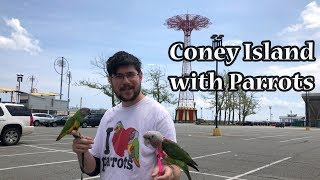 Visiting Coney Island with our Parrots