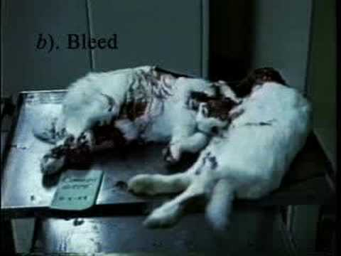 What are some good animal testing statistics?