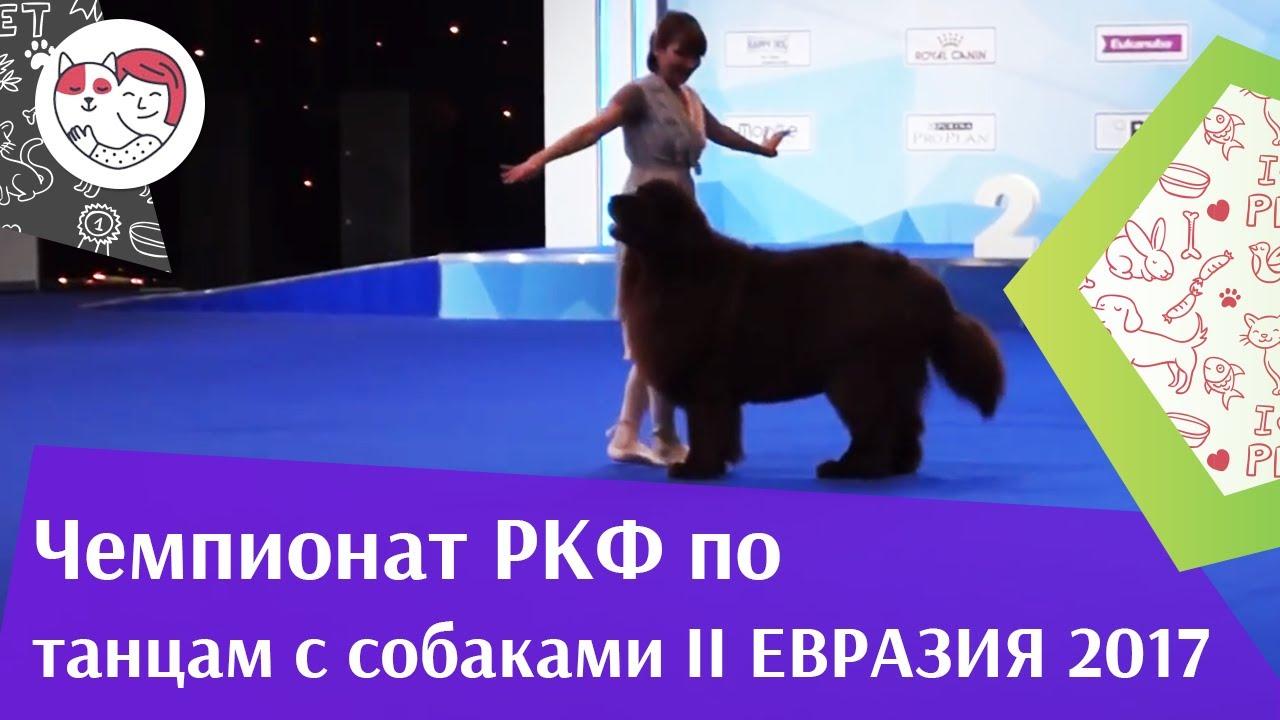 Чемпионат РКФ по танцам с собаками 2 на Евразии 17 ilikepet