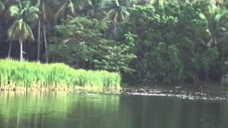 Philippine Wild Duck in Pagudpud