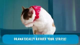 Tiger FunnyWorks  - YOU WILL FAINT - FUNNY CAT compilation - Tiger FunnyWorks