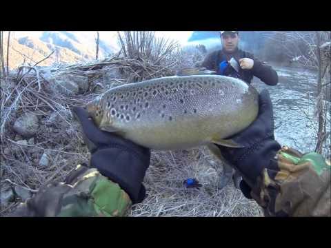 Cattura di pesca di video di un abramide comune di sottili