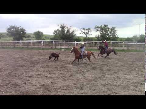 Spanky heeling 6