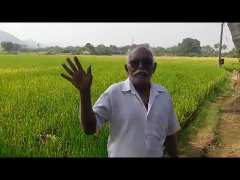 A Farmer in Perambalur District explaining the ways of increasing the yield of Paddy