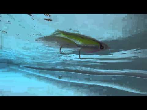 Mis mosca Saltwater predilectas!!!.. el terror de los mares!!!