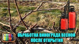 Чем опрыскать виноград весной от клеща