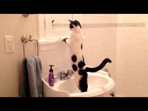 Hilarious Pets that Brighten Your Day!