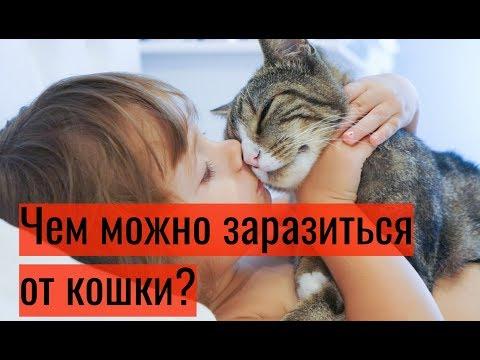 Чем можно заразиться от кошки?