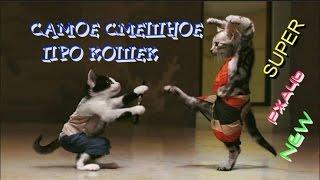 РЖАЧЬ ●САМОЕ СМЕШНОЕ ПРО КОШЕК ● Смешные Кошки 2016 | Ютуб Смешные Кошки | Смешные кошки