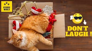Cute and funny cat videos -Tik Tok #50