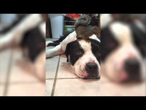 Пес защищает белку от кота