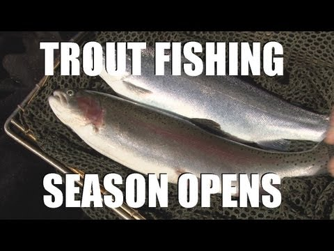 Fieldsports Britain – Trout fishing and the first roebuck of the season