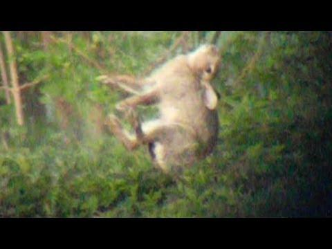 Long range hunting – High impact filming
