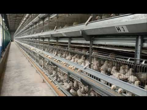 Rearing Grower Cages