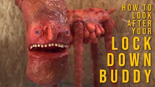 The Lock Down Buddy 2: How to look after your buddy