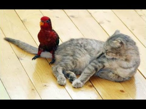 Compilation: Parrots LOVE Annoying Cats