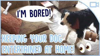 How to Keep Your Dog Busy While You're At Work!