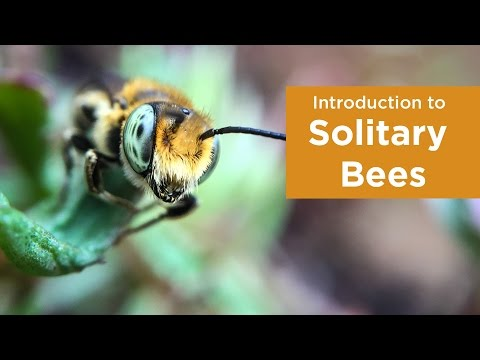 , title : 'Introduction to Solitary Bees