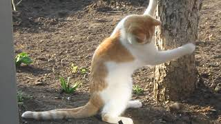 Кот Кеша впоймал мышь
