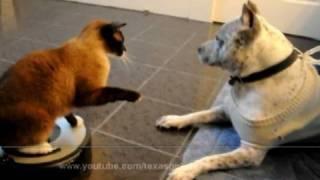 Сиамский кот на пылесосе