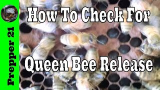 Two Ways To Check For Queen Bee Release