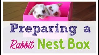 How to Prepare a Rabbit Nest Box