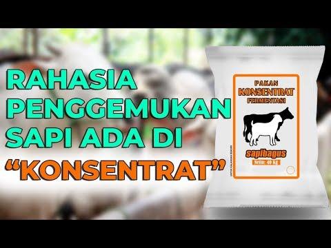 Manfaat Konsentrat untuk Pakan Ternak