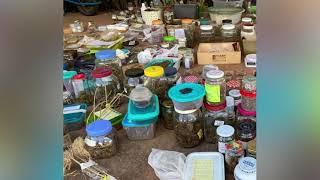 Polícia localiza cultivo de maconha e laboratório para produção da droga em fazenda